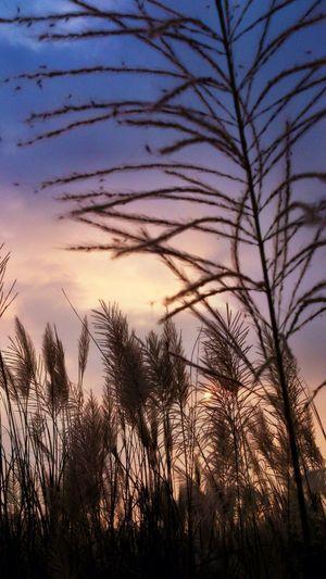 人生總有亮點,儘管有時得折騰一番才能找到! Sunset.