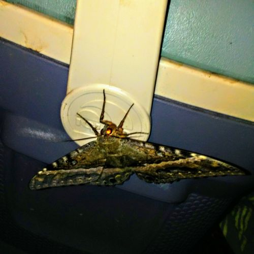 Insect One