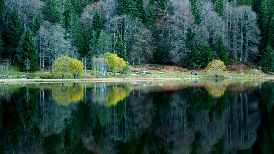 Black Forest Germany Autumn Beauty In Nature Day Feldsee Forest Lake Lakeside Landscape Mountain Nature No People Outdoors Reflection Scenics Tranquil Scene Tranquility Tree Water