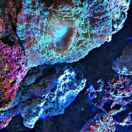 Coralreefs at the aquarium