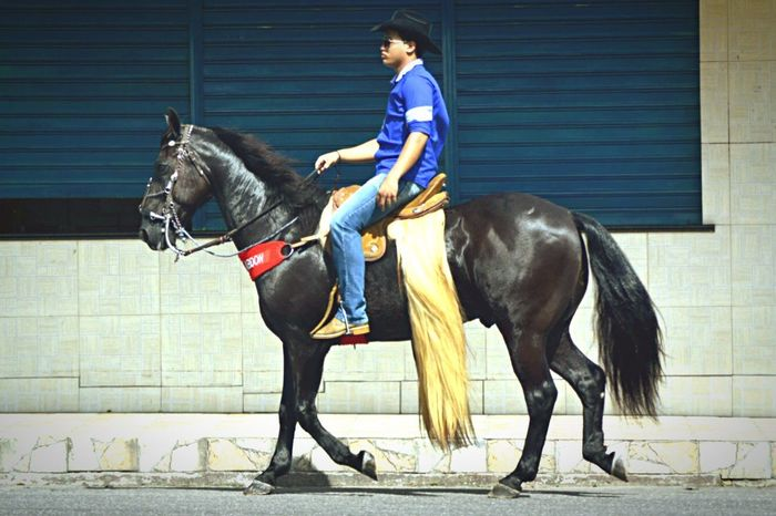 Cavalo Horse Cavalgada Bragança Nikon NIKON D5300 Photography Animal