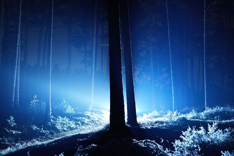 Scenic view of forest against sky at night