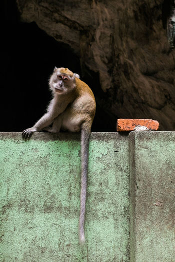 Portrait of monkey sitting on wall against batu caves