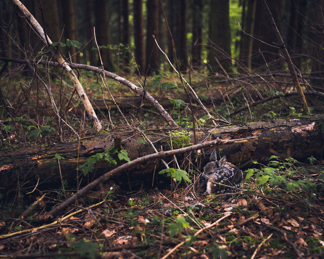 Baby Deer Bambi Brown Deer Deersighting Forest Growth Sleeping Deer Stierenberg Switzerland Trees Trunk Trunk Tree Wilderness The Great Outdoors - 2017 EyeEm Awards