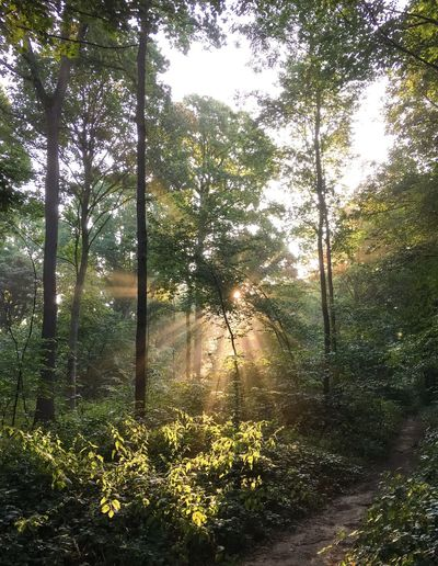 Forest Tranquil Scene Tranquility WoodLand Sunlight Landscape Sunbeam Beauty In Nature Outdoors Taking Photos Early Morning