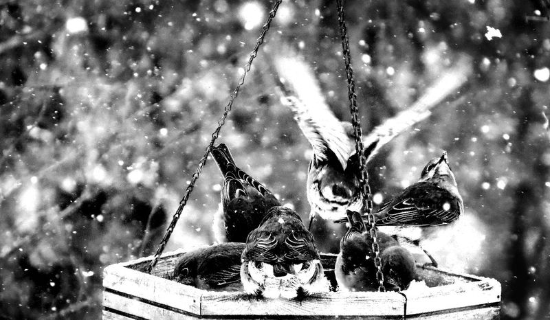 At The Feeder Bird Feeding Birds Of A Feather Birdwatching Black And White Birds Blue Birds White Snow Christmas I'm Outta Here Meal Worm Special Outdoors Perched Birds Song Birds And Snow Winter Birds