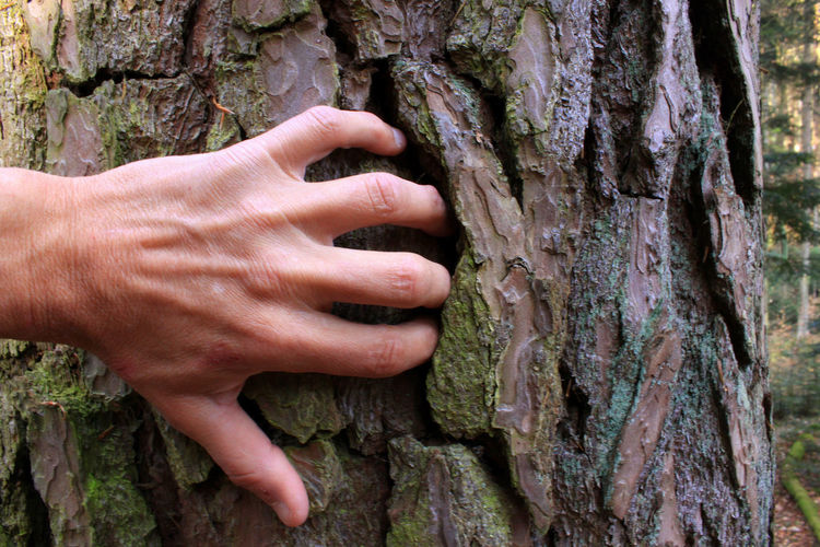 Cropped hand of person touching tree trunk