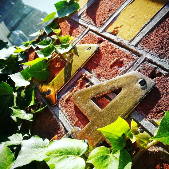 Lucky number 14 14 Housenumber XIV Leafs Leafs Photography Green Bricks House Home Home Is Where The Art Is Early Morning Sunshine Utrecht Holland Netherlands Nederland Taking Photos Colour Of Life