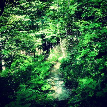 Nature Green Taking Photos Road