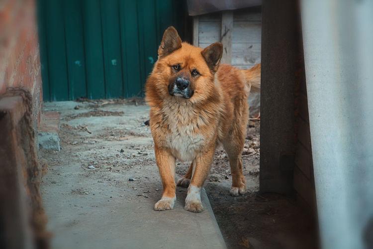 Portrait of dog standing on door