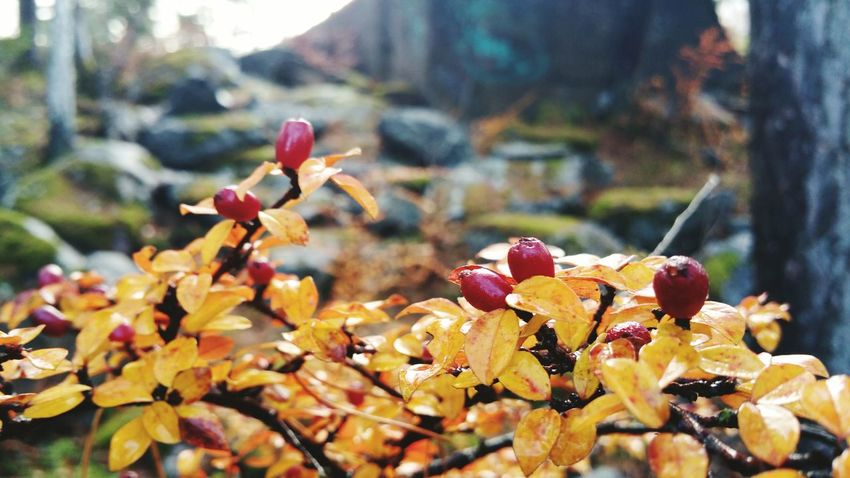 Autumn Nature Leaf Outdoors Flower No People Day Beauty In Nature Focus On Foreground Fragility Growth Plant Freshness Tree Close-up Water