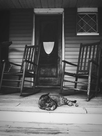 Owen relaxing on the front porch Domestic Cat One Animal Animal Themes Mammal Pets Summertime Domestic Animals Feline Relaxation Lying Down No People Day Indoors  Full Length Sitting