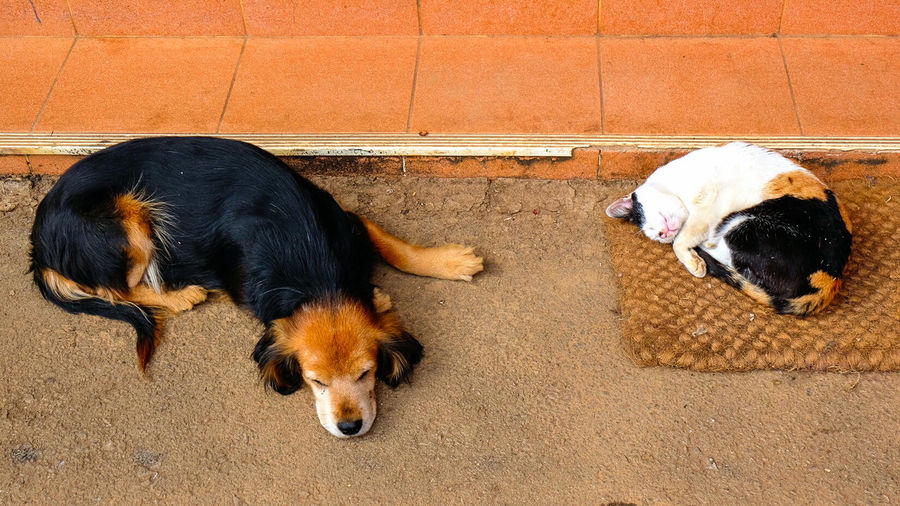 High angle view of dog and cat sleeping on street