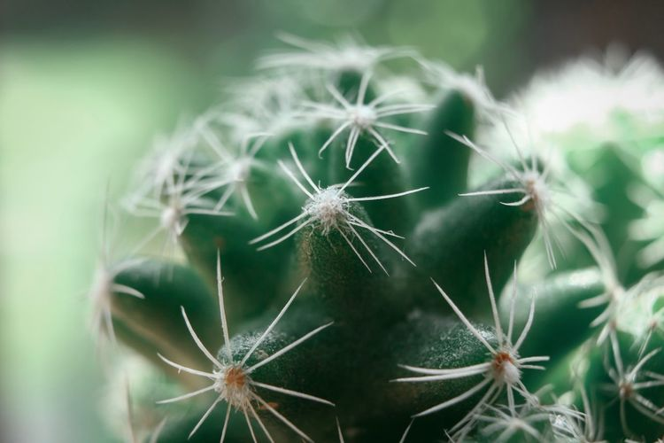 Close-up of dandelion on cactus outdoors