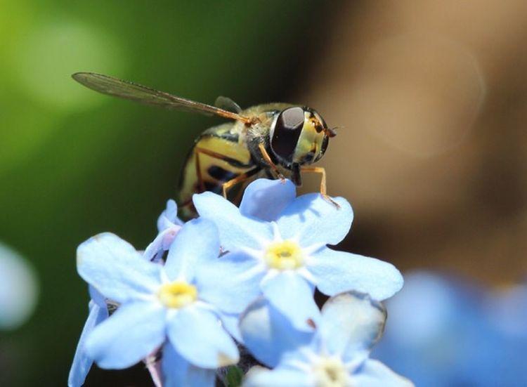 Flowering Plant Flower Animal Themes Insect Invertebrate Animal Wildlife Animal