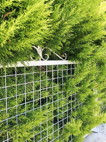 Beautiful Eco Green Green Color Natural Nature Biology Close-up Colorful Day Eco System Ecology Fence Flora Grass Green Color Growth Leaf Nature Nature Fence Nature_collection No People Outdoors Plant Tree