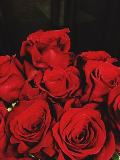 Red Rosé Rose - Flower Flower Flowering Plant Petal Close-up Beauty In Nature Plant Freshness Flower Head Vulnerability  Inflorescence Fragility No People Indoors  Nature Flower Arrangement Still Life High Angle View