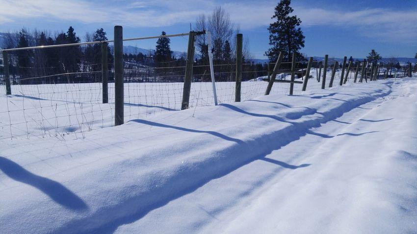 Cold Temperature Snow Winter Sky Tree Outdoors No People Day Nature Farm Farm Life Farmlandscape Landscape Light And Shadows Kelowna British Columbia Canada Shades Of Winter