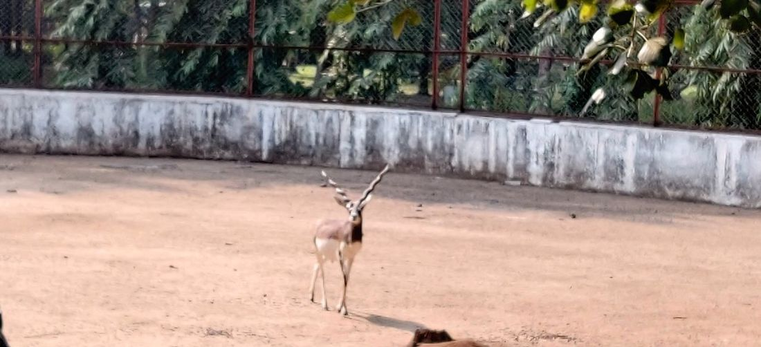 View of horse on field in zoo