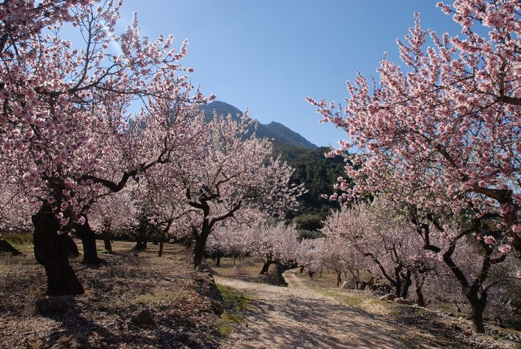 Cherry blossoms in spring against sky
