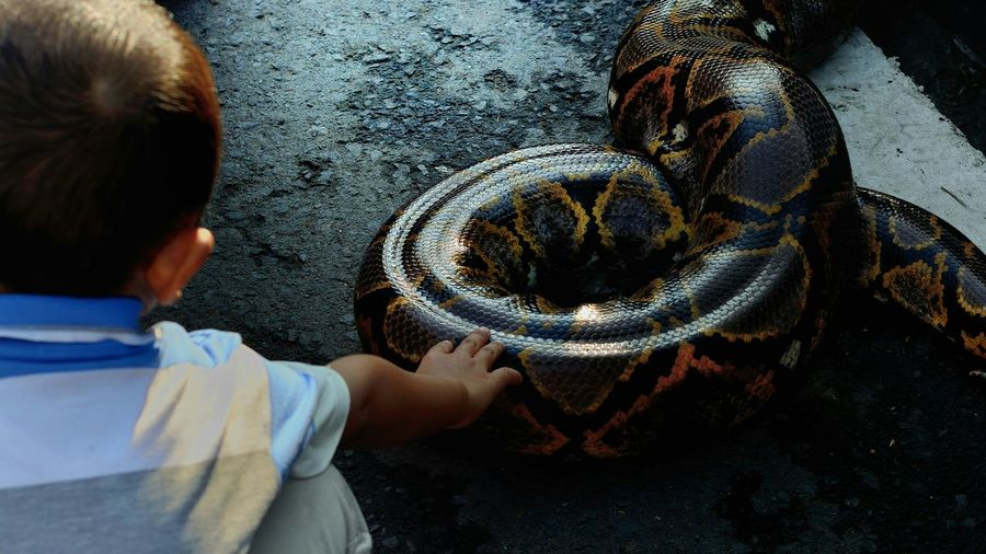 Rear View Of Kid Touching Snake At Zoo