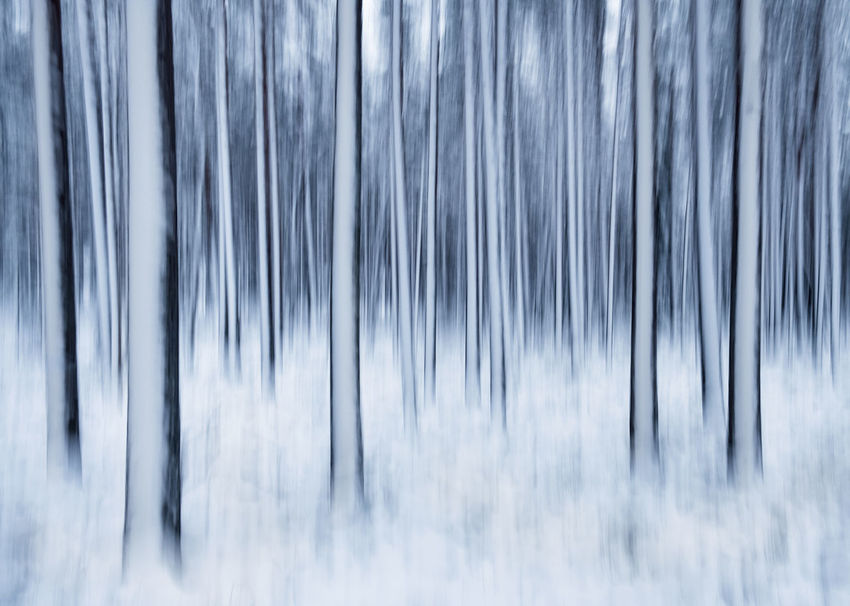 Winter landscape with trees and snow. This is taken by shaking camera little bit in long exposure. Fine Art Photography Finland Impression Moment Pine Shaking WoodLand Art Backgrounds Beauty In Nature Blue Close-up Cold Temperature Day Forest Long Exposure Nature No People Outdoors Scenics Snow Tree Weather White Winter Perspectives On Nature Shades Of Winter
