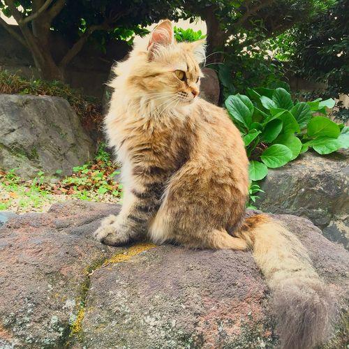 Returnbeauty Cat Hair Golden ✨😽 Autumn Japanese  Garden 🌿🍂 EyeEm Best Shots IPhone Taking Photos
