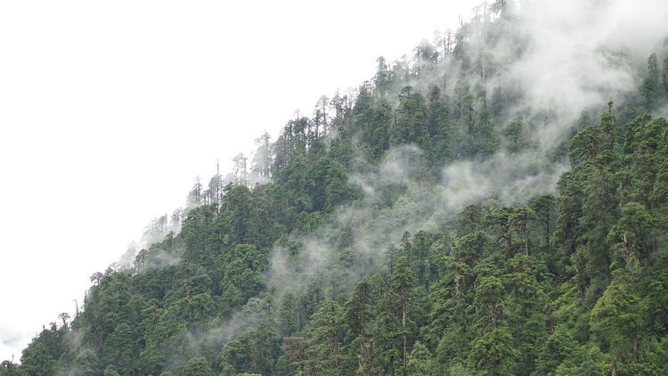 Beauty In Nature Fog Foggy Forest Green Color Growth Landscape Majestic Motuo Mountain Non-urban Scene Outdoors Scenics Tibet Tranquil Scene Tranquility Tree Mist