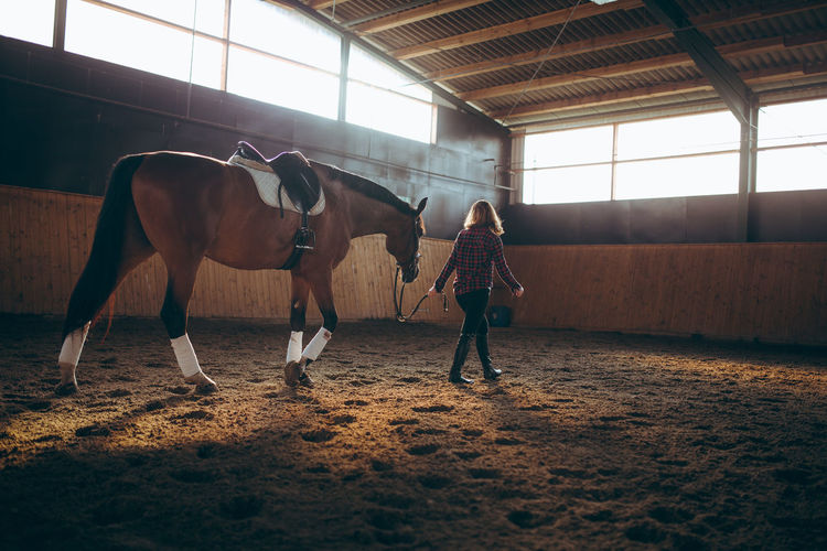 Mature woman is having a training with her horse on a farm Adult Animal Themes Day Domestic Animals Horse Horseback Riding Indoors  Lifestyles Livestock Mammal Mature Adult Mature Women Real People Rear View Sport Sports Training
