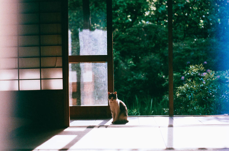 Architecture Domestic Animals Indoors  Japanese House Nature No People One Animal Pets Sitting Sliding Door Tree Waiting Window