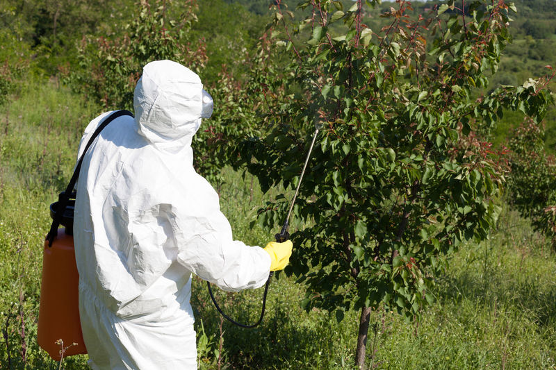 Man spraying toxic pesticides or insecticides in fruit orchard. Agriculture Backpack Day Farmer Fertilizer Field Garden Gloves Hand Mask - Disguise Men Nature Non Organic One Person Orchard Fruit Outdoors People Pesticides Real People Spraying Suit Sunlight Toxic White Color