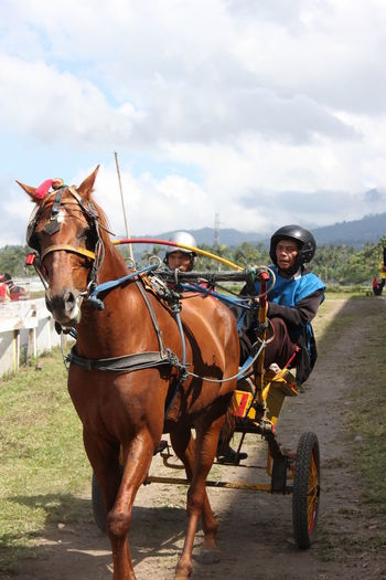 Old collection Horse , Horse Racing , Sport , Animal , VillagePeople Indonesia_photography INDONESIA Minahasa Taking Photos