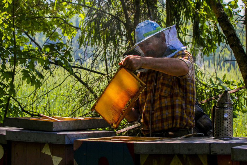 Apiary Beehives Beekeeper Beekeeper's Hat Beekeeper, Honey Day Forest Forest Ape Nature Occupation One Man Only One Person One Senior Man Only Outdoors Protective Workwear Real People Senior Men Working