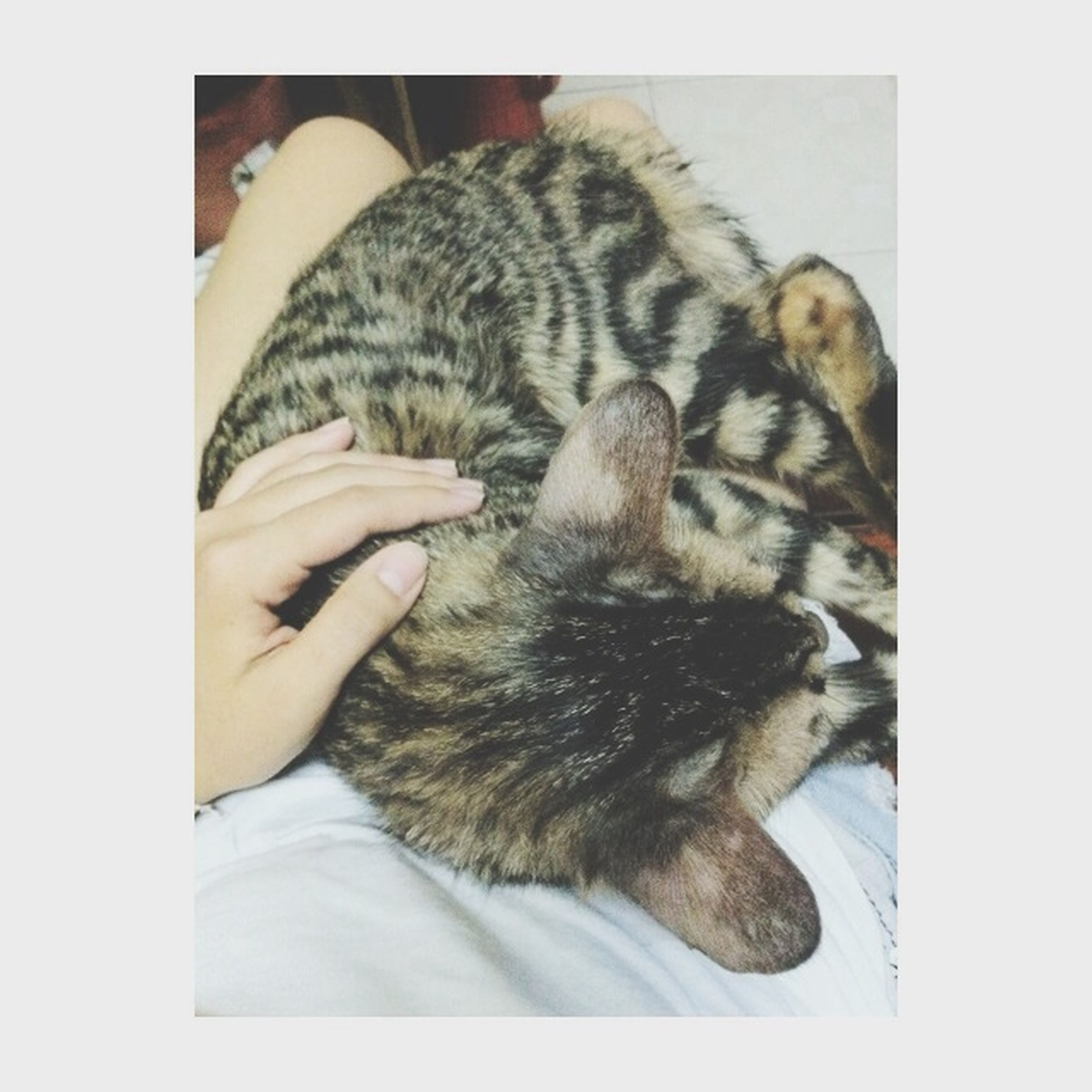 transfer print, animal themes, pets, one animal, domestic cat, indoors, domestic animals, mammal, auto post production filter, cat, sleeping, relaxation, feline, resting, lying down, high angle view, person