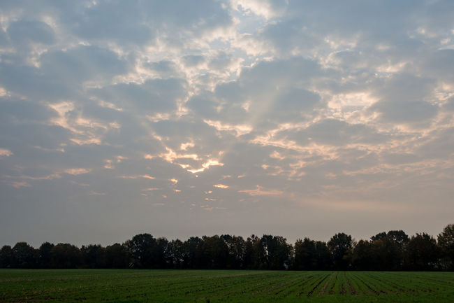 Agriculture Beauty In Nature Cloud - Sky Contry Living Contryside Day Field Freshness Grass Growth Landscape Landscape_photography Nature No People Outdoors Rural Scene Scenics Sky Sunrise Sunset Tranquil Scene Tranquility Tree