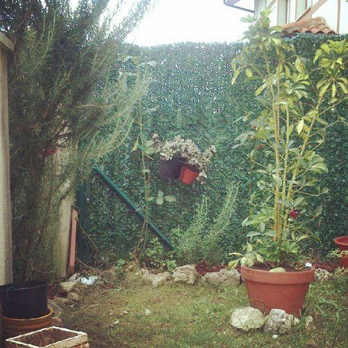 Jardin Rasines Cantabria Internacional instagram internacionalphoto instaphoto instalove photo jardín maceta Rosas flores
