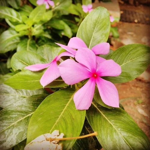 A snap in the morning, Morning Travel Flowers Beauty