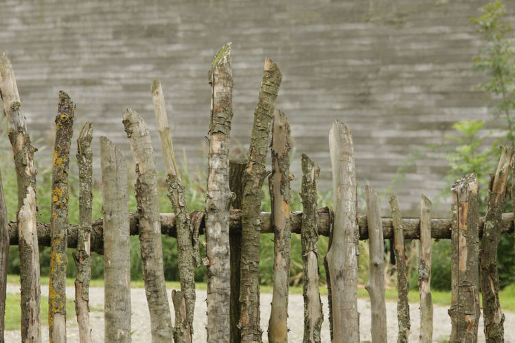 UNESCO Welterbe Wooden Fence Barrier Close-up Feedersee Fence Lake Dwelling Nature Outdoors Pile Dwelling Wood Fence
