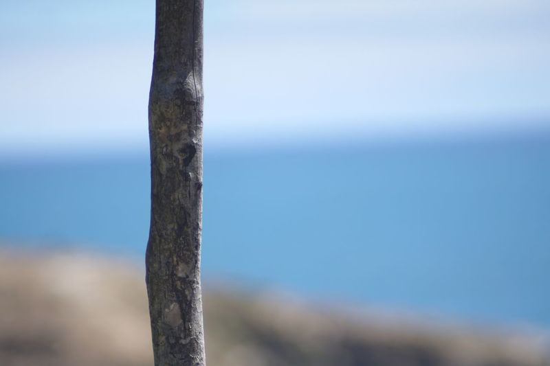 Apoyate en mi Wood - Material Stick Fence Nature Focus On Foreground No People Fences & Beyond Thirds Tranquility Outdoors Beauty In Nature Close-up Travel Isla Chiloe Vacations Relaxing Sony A6000 Chile Eye4photography