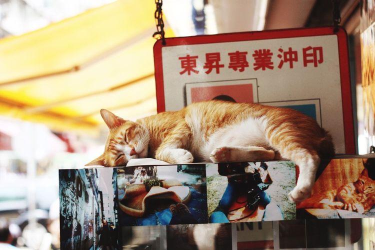 Close-up of cat sleeping on floor