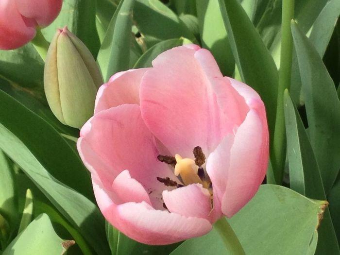 Hdrflower