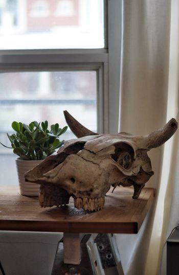 Window Sill Indoors  Window Dinosaur Extinct Green DIY House And Garden Living Room Skull Decorative Nature Staging Freshness Table Plant Close-up Woodsy Indoor Plants Indoors  Growth Spring Indoors  Life Summer