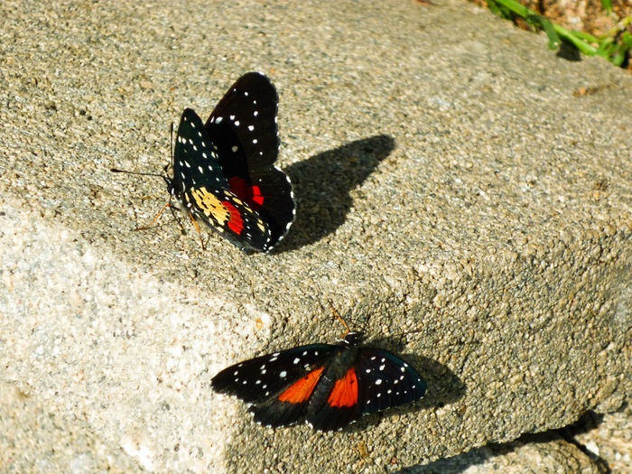 Animal Themes Insect Sunlight Butterfly - Insect High Angle View Wildlife No People Outdoors Nature Close-up Butterfly Nature Meets Man Perspectives On Nature