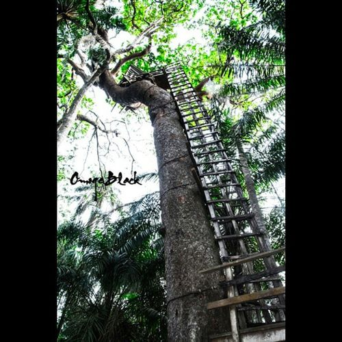 How high! Omogeblackphotography Nigeria NikonLife Nikon Nature Forest Lifethroughmylense Lovethepower Lovethesport Letthesunwashmysinsaway Africa Treehouse Travelphotography