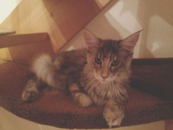 My new cat ❤️❤️❤️😂😂😂