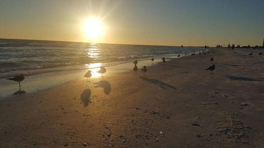 Beach Scenics