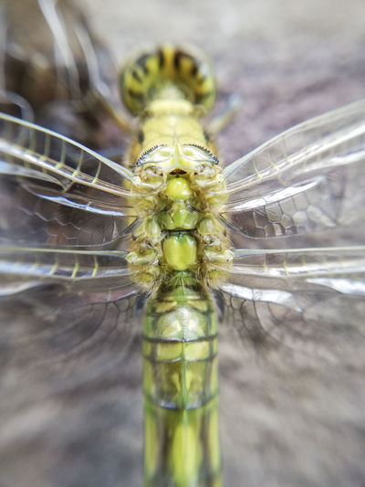 Close-up of dragonfly on glass