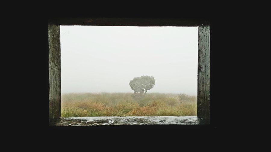 Montane Forest Grassland Tree Nuwara Eliya Sri Lanka Horton Plains National Park Mist Foggy