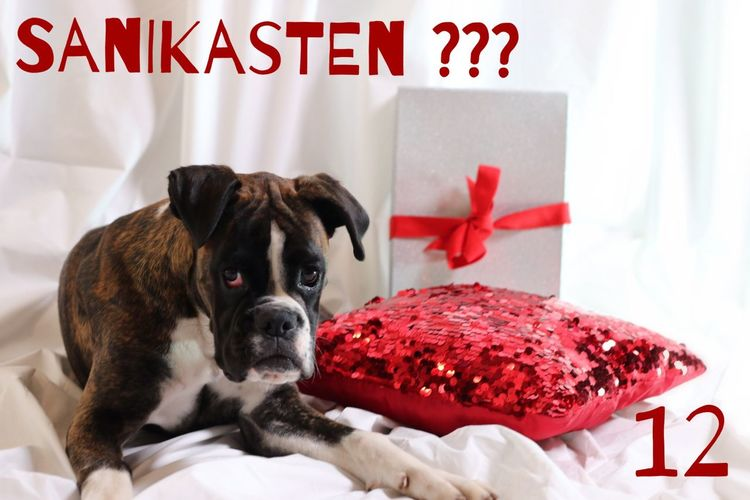 Türchen 12 (ambulance-box ;-) ) Juno's Adventskalender Juno's World For My Friends That Connect Hello World Boxer Dogs I Love My Dog Boxer