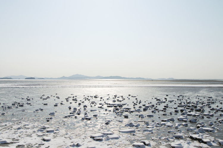 winter scenery at the seaside of Jeungdo Island in Sinan, Jeonnam, South Korea Colors Frozen Ice Jeungdo Snow ❄ Winter Winter Landscape Beach Beauty In Nature Clear Sky Cold Cold Temperature Day Frozen Mud Flat Frozen Seaside Horizon Over Water Landscape Mud Flat Nature No People Outdoors Scenics Sea Seaside Sinan Sky Snow Tranquil Scene Tranquility Water Winter Land